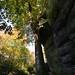 Within the High rocks (Royal Tunbridge Wells, Kent)