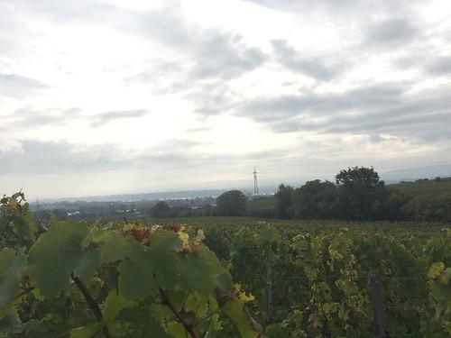 11 - View to rhine / Blick zum Rhein