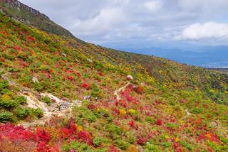 くろがね小屋への道は綺麗な紅葉