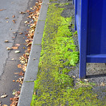 Green and blue at a Preston bus stop