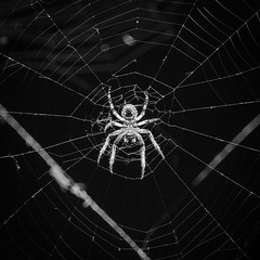 Along came a spider…