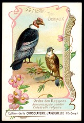 French Tradecard - Condors