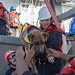 Sailors help Zeus, one of two dogs who were accompanying two mariners. by Official U.S. Navy Imagery