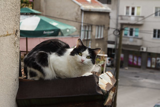 cat239, one more citizen of Sarajevo