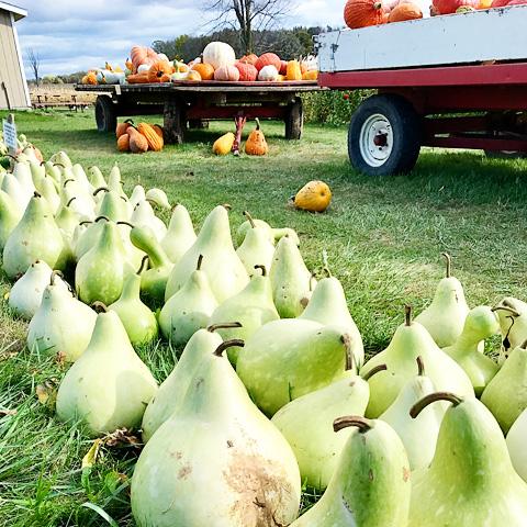 pumpkinfarm14-1017
