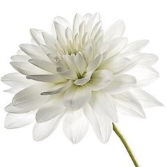 White flower high key