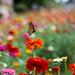 Butterfly Landing by clicks4u
