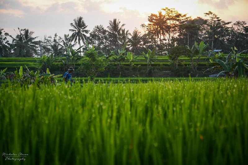 Indonesia | Bali Farmer