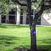 Ribboned Tree on VC Campus