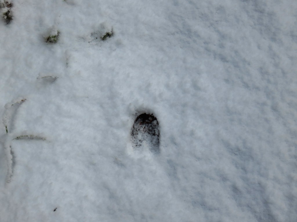 Deer print along the Senoj Lake Trail