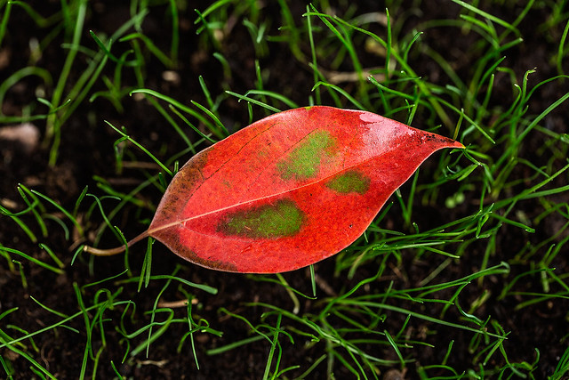 floating leaf in a grass sea
