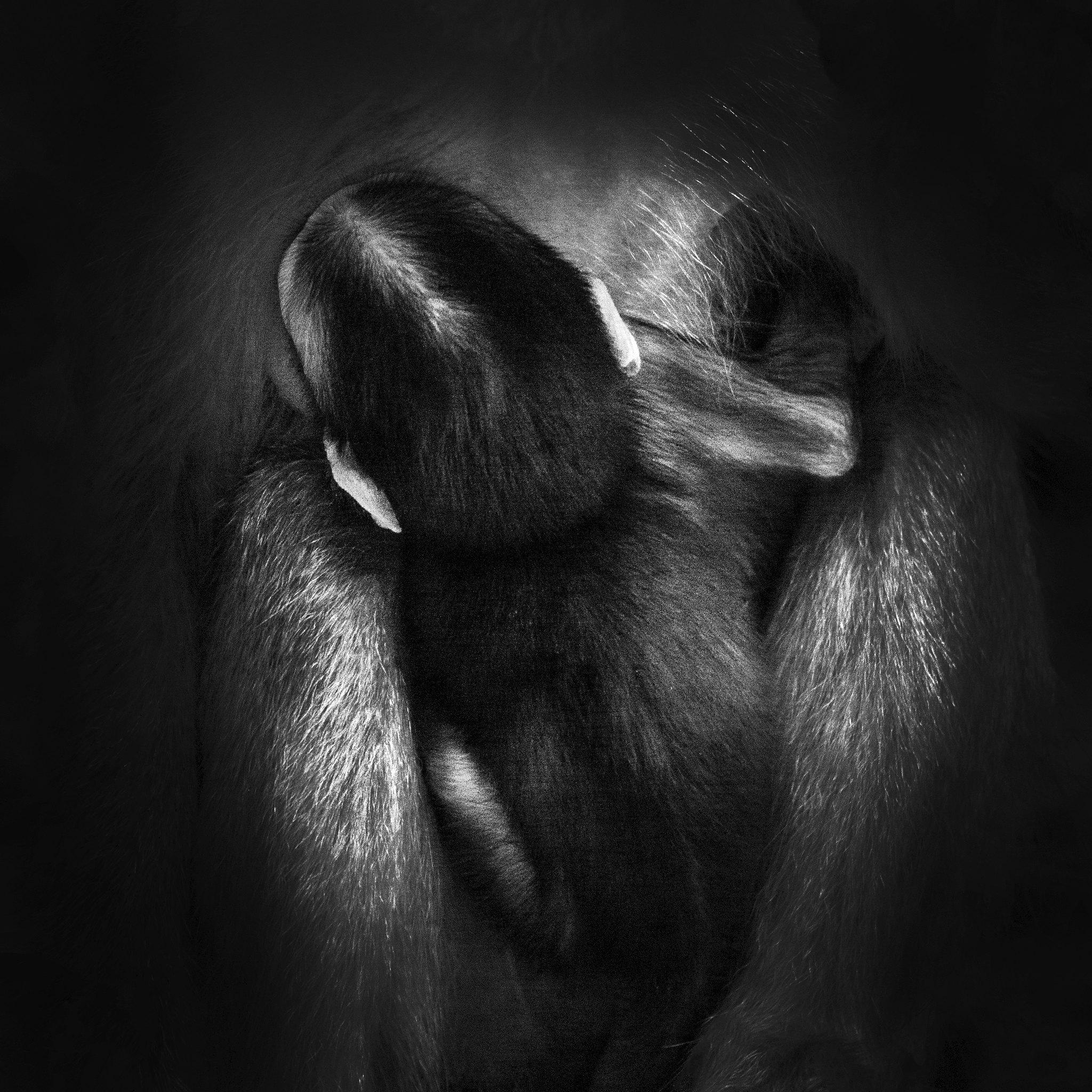 GRAB - abe - mørk