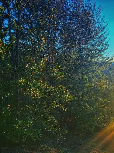 jennifertaylor mobilephotography iphone6s blueridge mineralbluff appalachians mountains highviewlodge cabin thegreatoutdoors trees