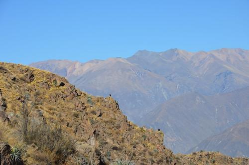 An einem Hang über dem Pass Cruz del Codor wartet ein Kondor auf Thermik.