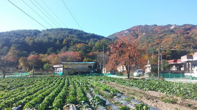 가을아침 | 까치밥