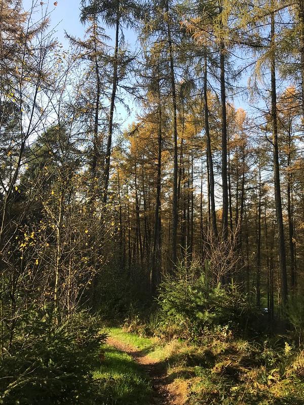 WF21: Stausee-Wülfing-Herkingrade