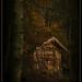 Das Haus im Wald. by Tauras Caio