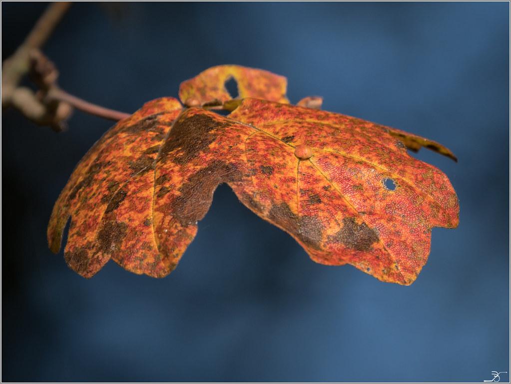 L'automne 38245396661_b4081d2966_b