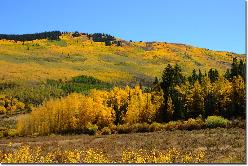 Fall colors, Kenosha Pass  (11)