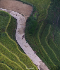 The rice way