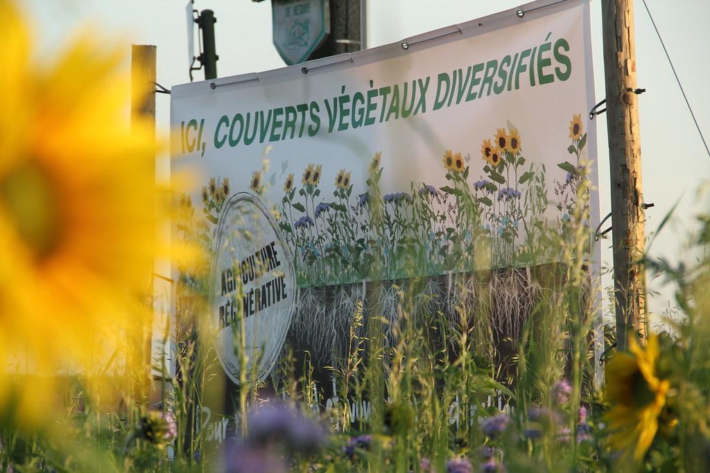 Couverts Végétaux Diversifiés - Saison 2017