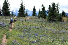 Hiking Heather Trail, Cascade Mountains