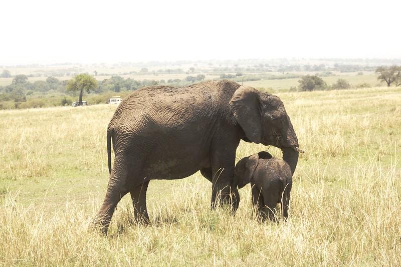Maasai Mara 2 26