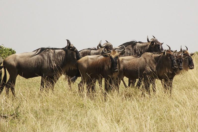 Maasai Mara 2 38