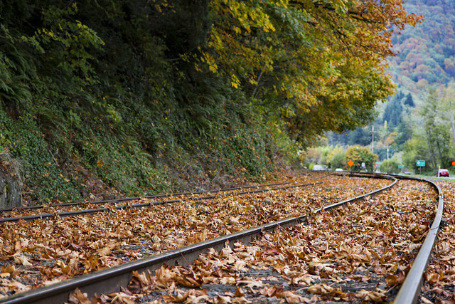 Train tracks and fall leaves