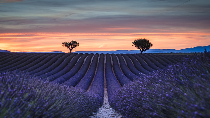 Living in Purple