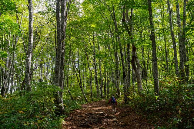 綺麗なブナ林から始まる登山道