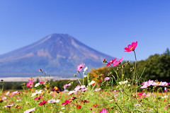 Fuji and flowers