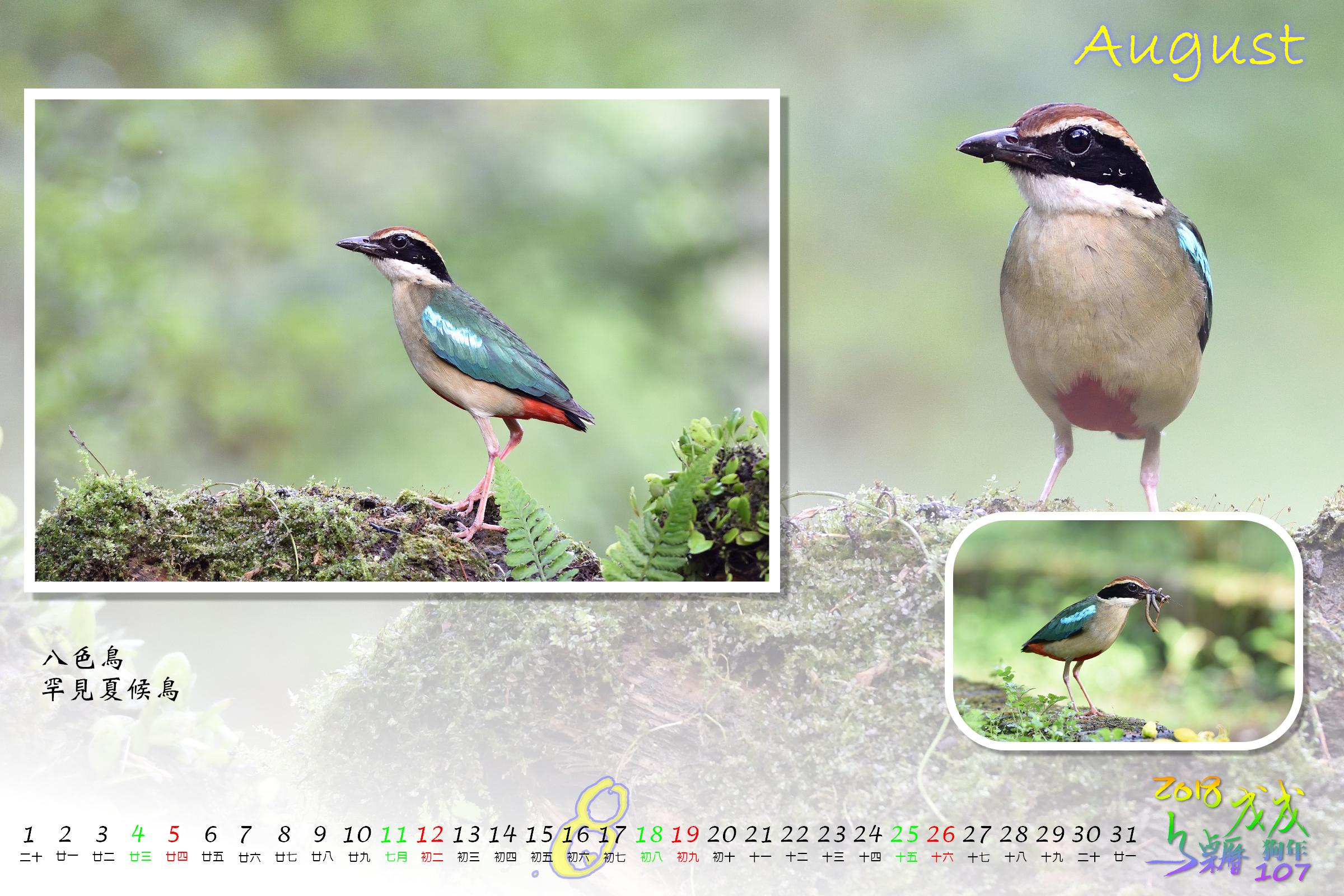 Calendar2018_Alder2_08