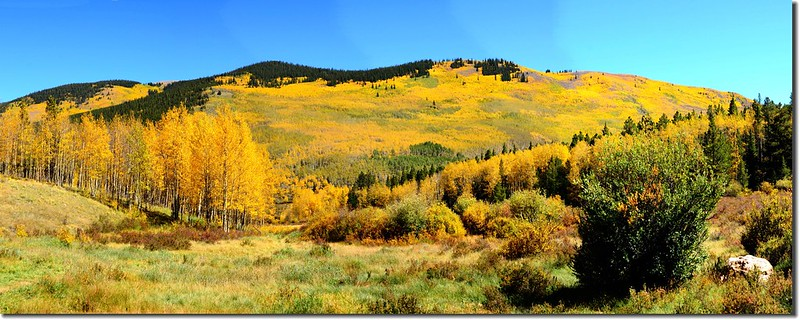 Fall colors, Kenosha Pass  (51)
