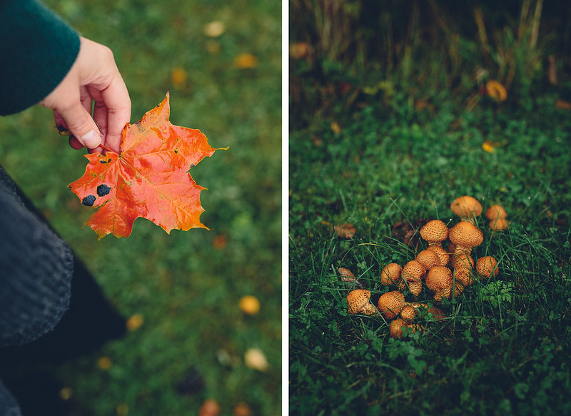 Autumn | Cashew Kitchen
