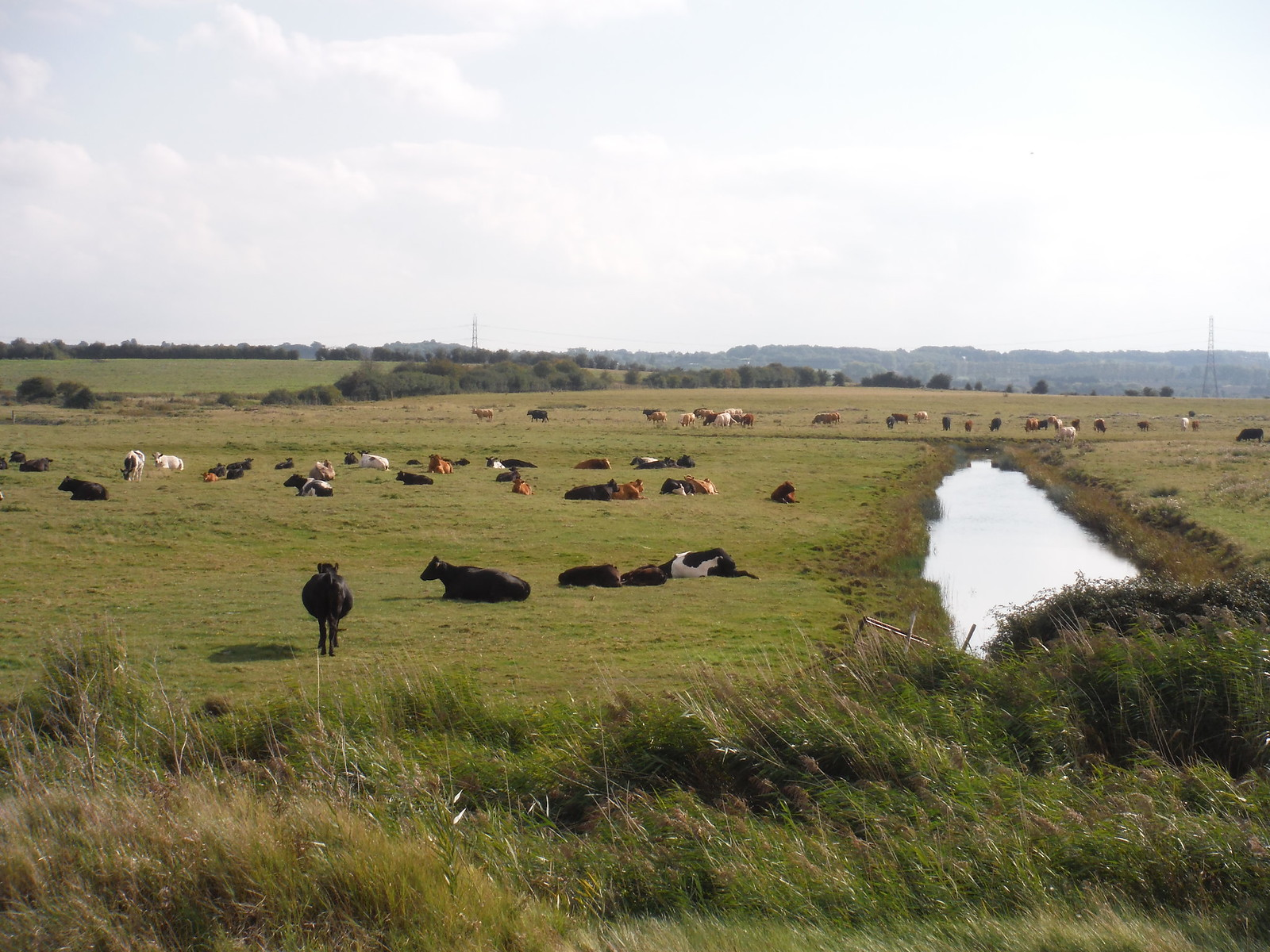 Grazing Marshes SWC Walk 299 - Teynham to Faversham