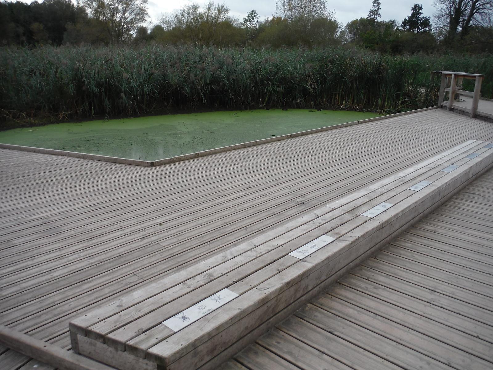 Boardwalk through Wetlands and Rest Area, Morden Hall Park SWC Walk Short 13 - Morden Hall Park and Merton Abbey Mills