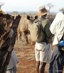 Walking with White Rhino, Mkhaya (22)