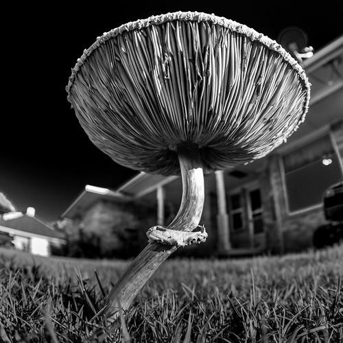 mushroom - Explore