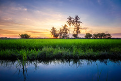 View of sunset at paddy field_DSC7233_1ar