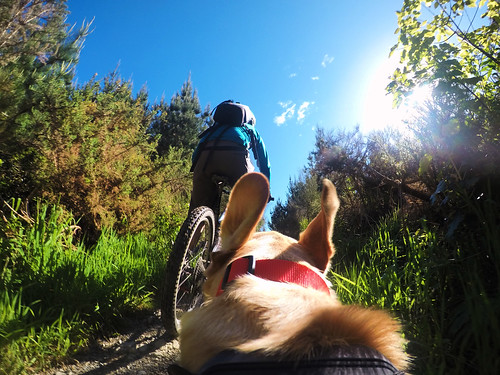 <p>Biking this afternoon in Upper Hutt with the GoPro Fetch mount set on photo's.<br /> <br /> Thanks to my Dog Bella for photo credits. She is a Lab/Spaniel cross.</p>