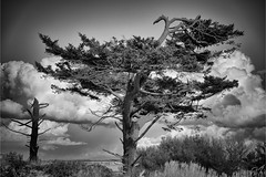 Tree C0727