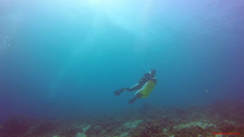 Responsible diver