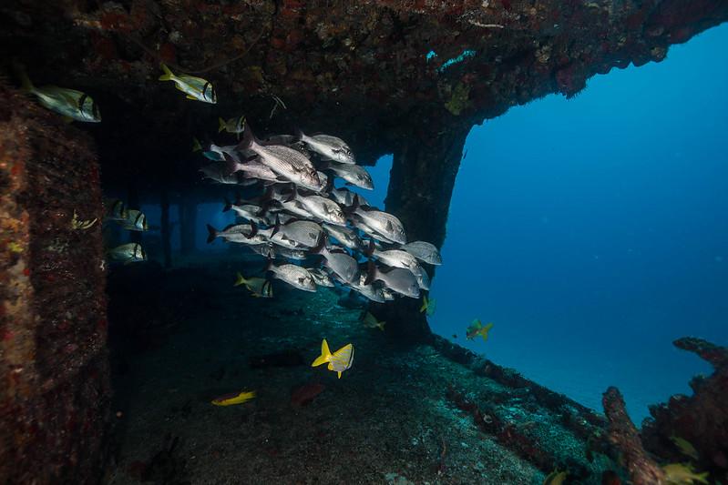 diving (19 de 77)
