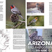 Arizona Site Guide Released by www.studebakerstudio.com