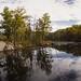 Beaver pond at Apshawa Preserve