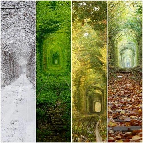 """Диво, витворене природою, або Чому варто побачити """"Тунель кохання"""""""