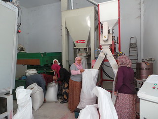 Thu, 10/19/2017 - 12:12 - Womem working at the seed unit processing at OEP - El Grine (Kairouan)