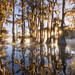 Morning Bliss on the Bayou by rootswalker