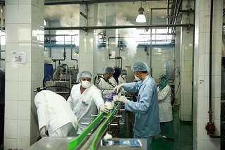 Sat, 10/28/2017 - 15:16 - Dairy processing, Al-Sharkia